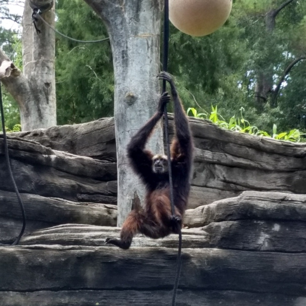 Monkey see, monkey do.